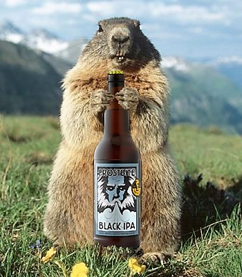 groundhog day winter or spring special foothills brewing